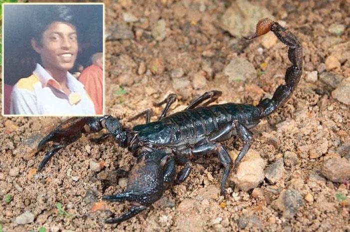 Emperor scorpion bite_1&n