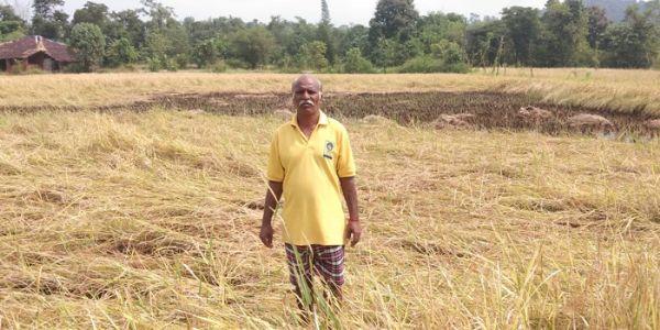 माणगावातील अतिवृष्टीग्रस्त शेतीचे पंचनामे सुरु