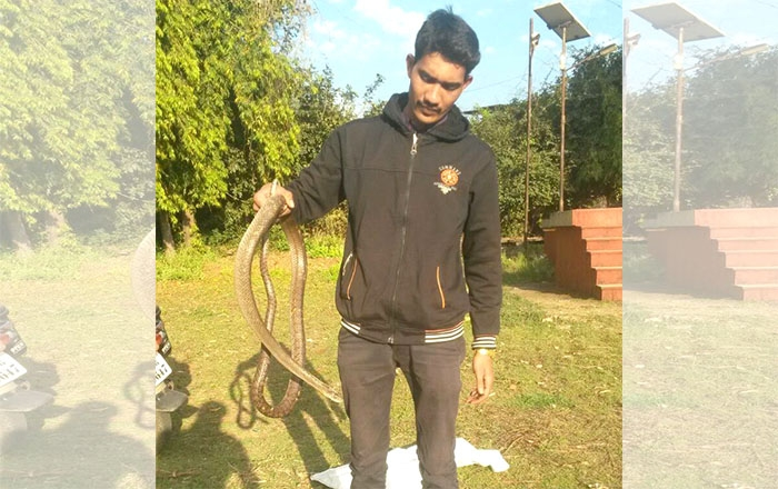 Save Snake_Snake Friend_N